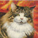 Cat with Orange Background #BD-0381