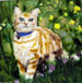 Cat in the Grass Tile #2187